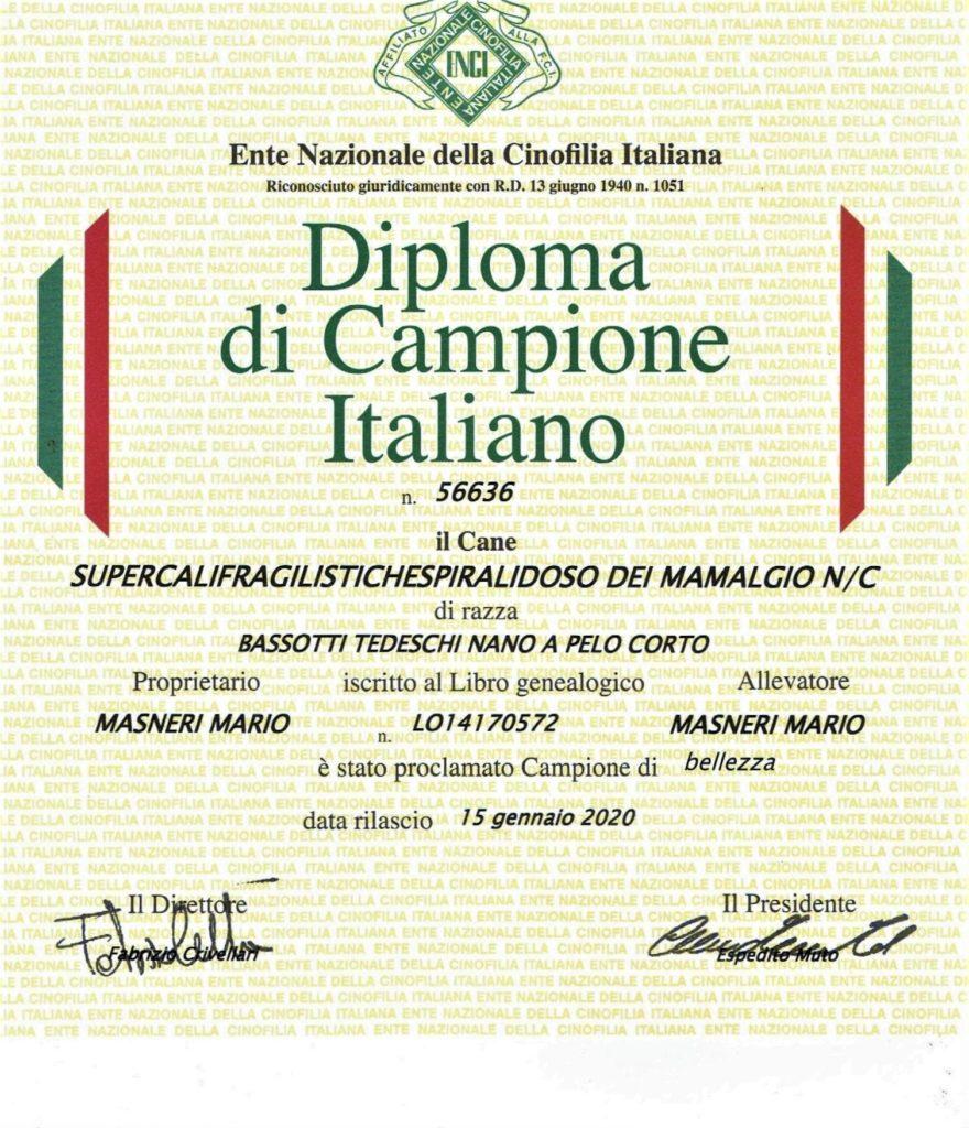 Campione italiano di bellezza